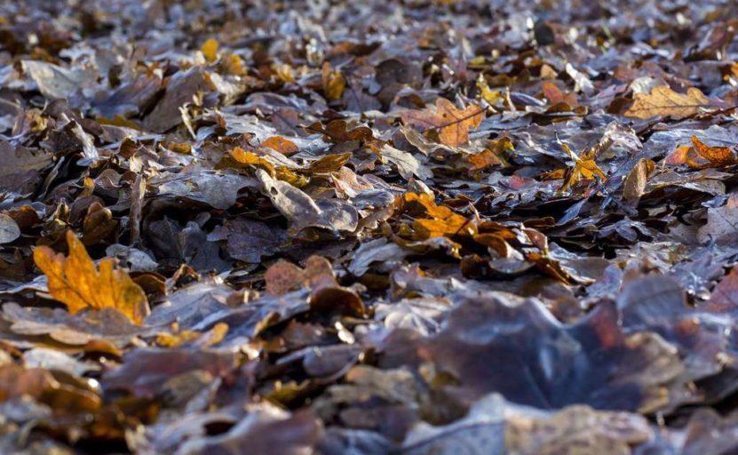 bioodpady wydzielone ze strumienia odpadów resztkowych