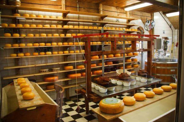 Fabryka serów, która powinna dostosować się do wymagań określonych w konkluzjach BAT